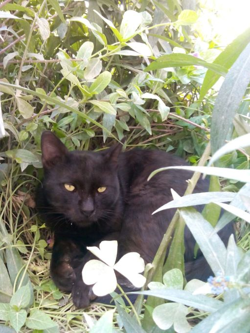 Black_Cat_in_the_Garden.jpg