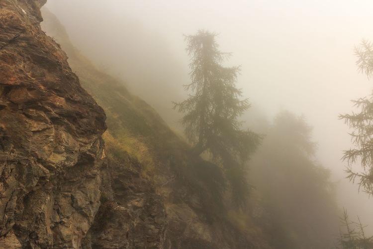 Bergtocht_van_Vens_naar_Bettex_in_Valle_d'Aosta_(Italië)._Bomen_langs_bergpad_in_dichte_mist_04